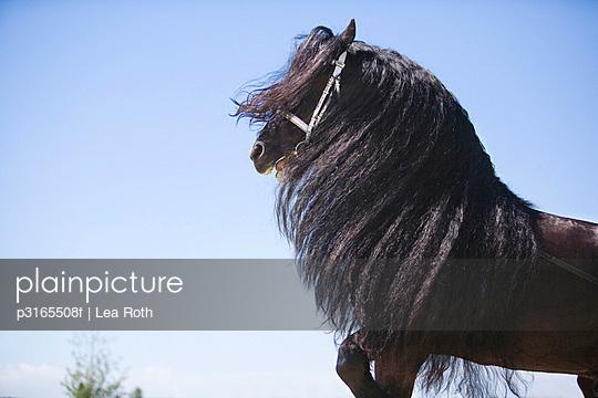 black horse with long mane