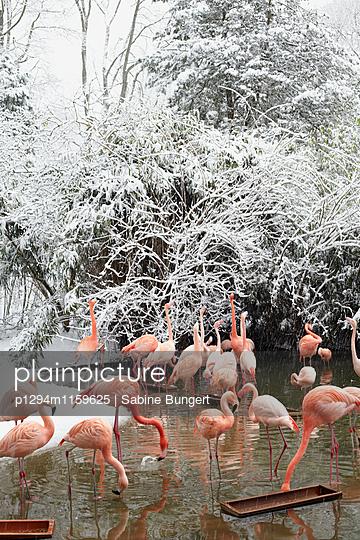 Flamingo - p1294m1159625 von Sabine Bungert