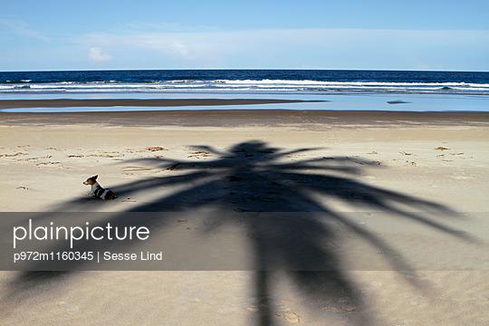 Hund liegt am Strand von Bahia - p972m1160345 von Sesse Lind