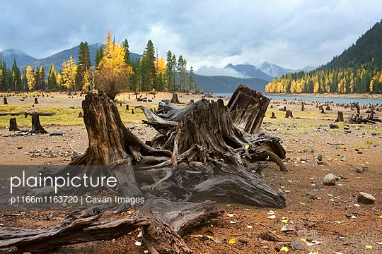 p1166m1163720 von Cavan Images