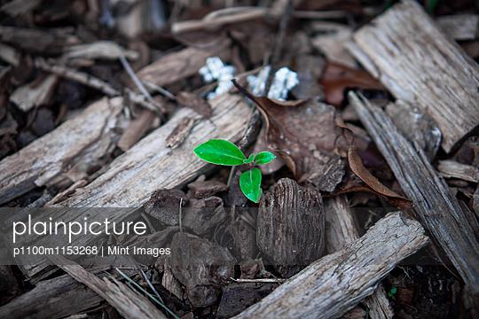 p1100m1153268 von Mint Images