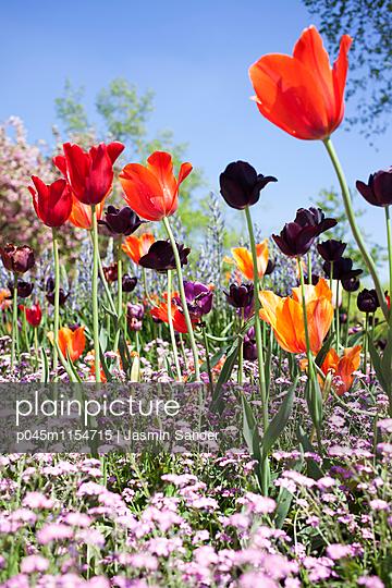 Bunte Frühlingsblumenwiese - p045m1154715 von Jasmin Sander
