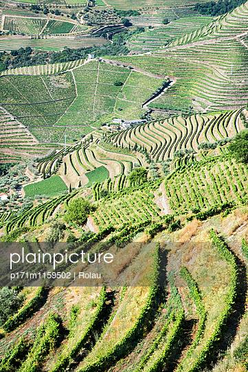 Weinberge am Dourotal - p171m1159502 von Rolau