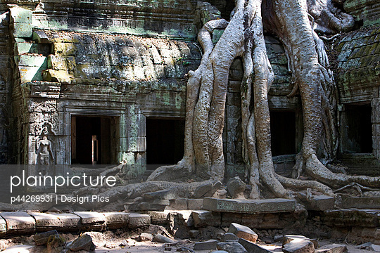 Tree roots covering temple ruins in the ancient city of Angkor Wat, Northwestern Cambodia