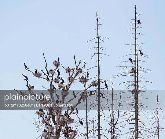 Birds perching on bare trees