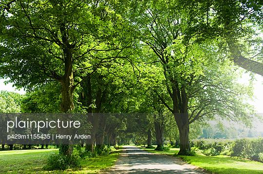 p429m1155435 von Henry Arden