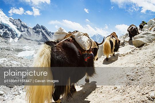 p1166m1151447 von Cavan Images