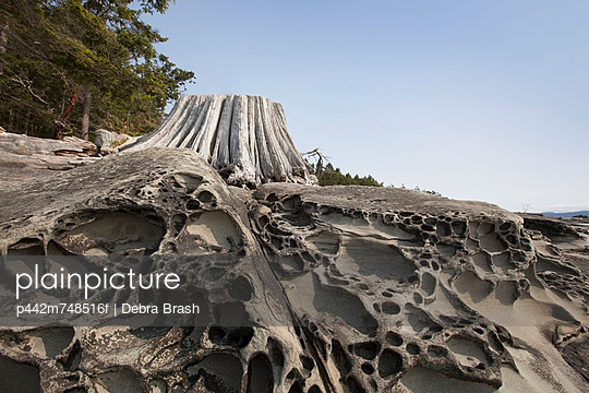 Weathered Driftwood And Sandstone Lace Rock Formations On Portland Island; Gulf Islands British Columbia Canada