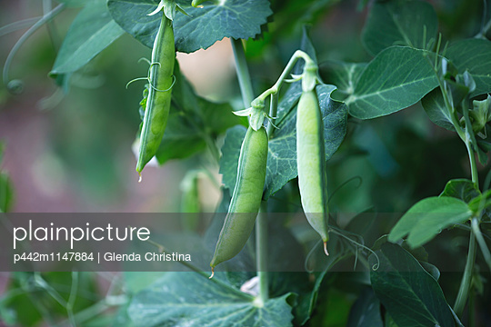 p442m1147884 von Glenda Christina