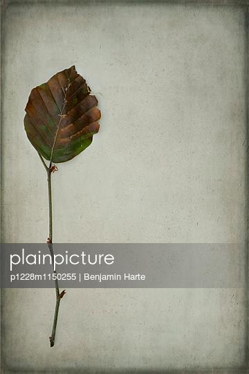 p1228m1150255 von Benjamin Harte