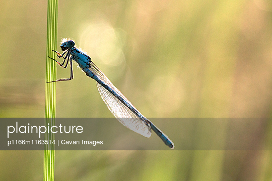 p1166m1163514 von Cavan Images