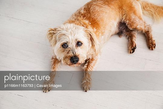 p1166m1163793 von Cavan Images