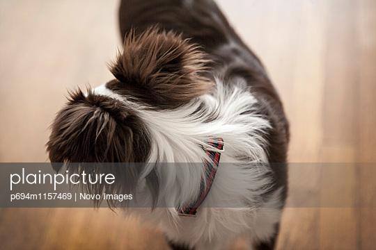 p694m1157469 von Novo Images