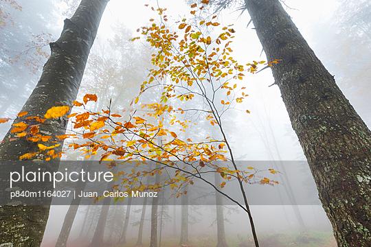 p840m1164027 von Juan Carlos Munoz