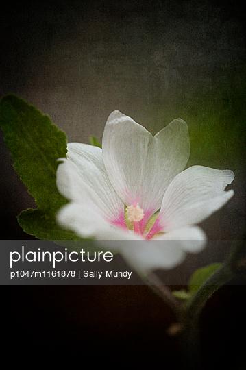 p1047m1161878 von Sally Mundy