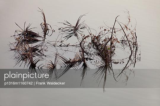 Palmwedel im Mekong Fluss, Vientiane, Hauptstadt von Laos, Asien - p1316m1160742 von Frank Waldecker