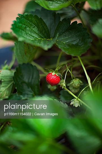 p1166m1154022 von Cavan Images