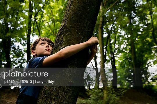 Junge lehnt an einem Baum im Wald - p1212m1152913 von harry + lidy