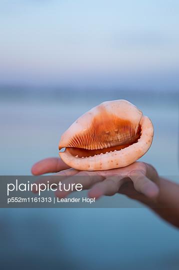 Südseemuschel auf einer Hand - p552m1161313 von Leander Hopf
