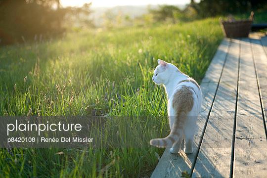 Cat on terrace