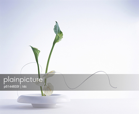 White flowers on a plate with a spiral leaf