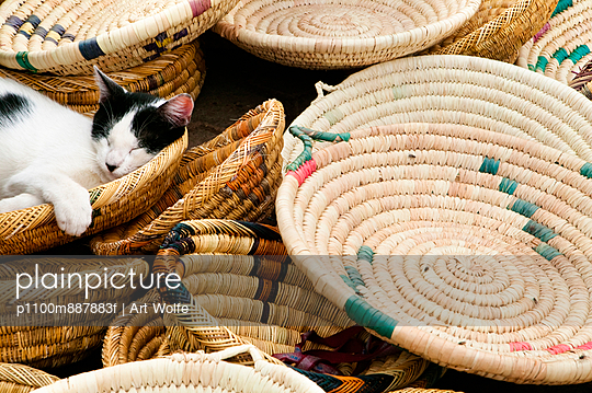 A cat asleep in baskets for sale at the market. Morocco
