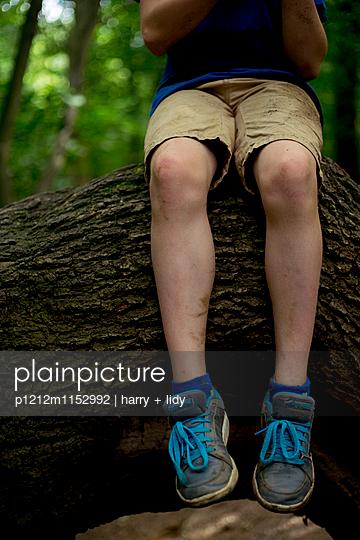 Junge auf Ast im Wald - p1212m1152992 von harry + lidy