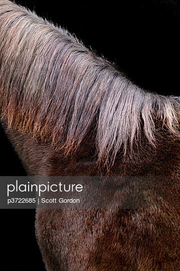 Close-up of horse\'s mane and fur