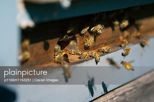 p1166m1163251 von Cavan Images