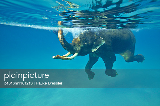 Schwimmender Elefant, Havelock Island, Andaman Islands, Union Territory, India - p1316m1161219 von Hauke Dressler