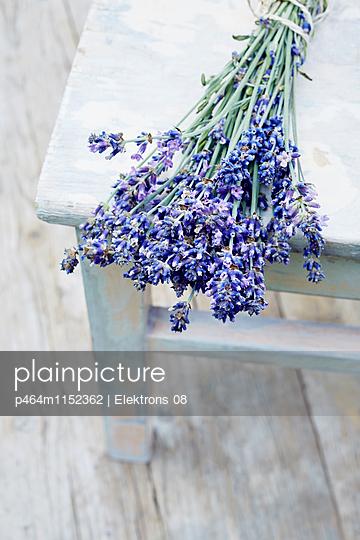 Lavendel - p464m1152362 von Elektrons 08