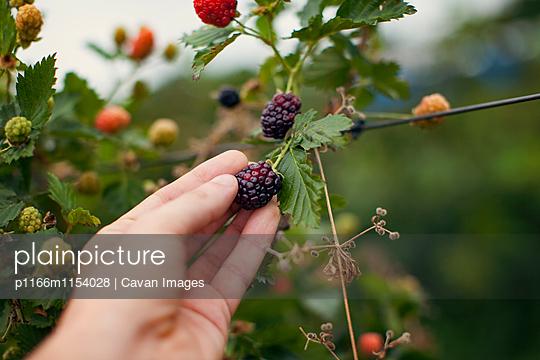 p1166m1154028 von Cavan Images