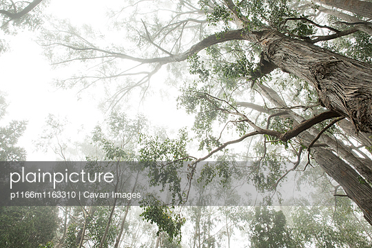 p1166m1163310 von Cavan Images