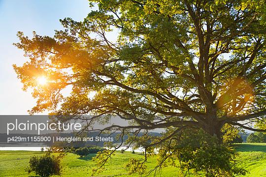 p429m1155900 von Henglein and Steets