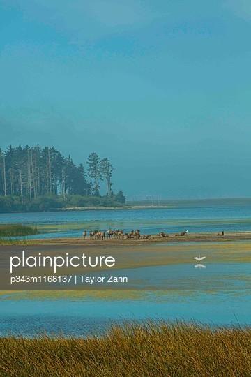 p343m1168137 von Taylor Zann