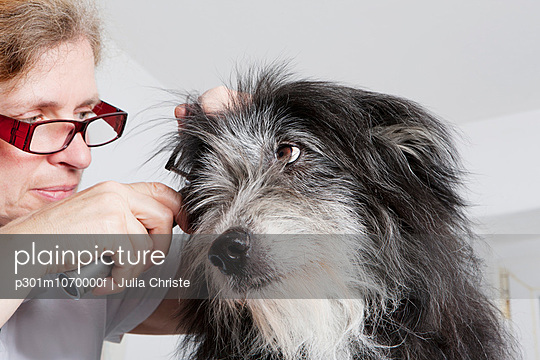 Female vet examining dog\'s ear in clinic