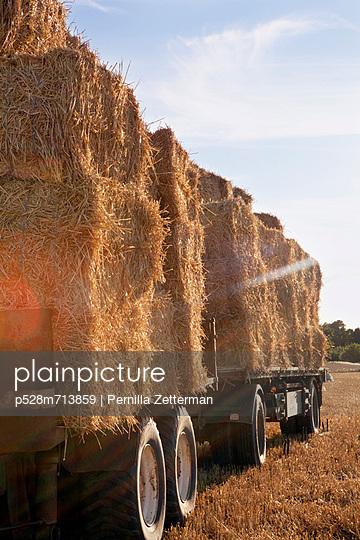 Straw bales on truck in field