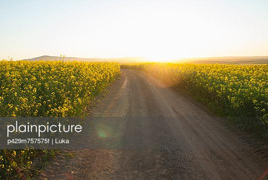 Dirt road in field of flowers