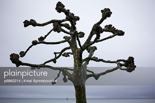 Tree and stormy weather