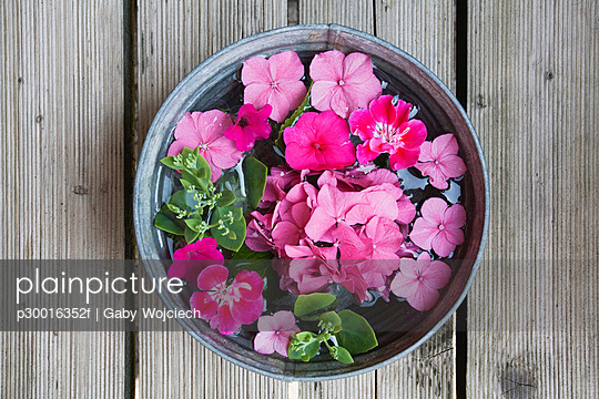 Hydrangea flowers, Geranium flowers and Impatiens walleriana flowers in a bowl with water, elevated view