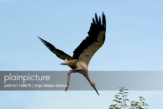 Sturzflug - p451m1149679 von Anja Weber-Decker