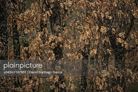 p343m1167951 von David Santiago Garcia