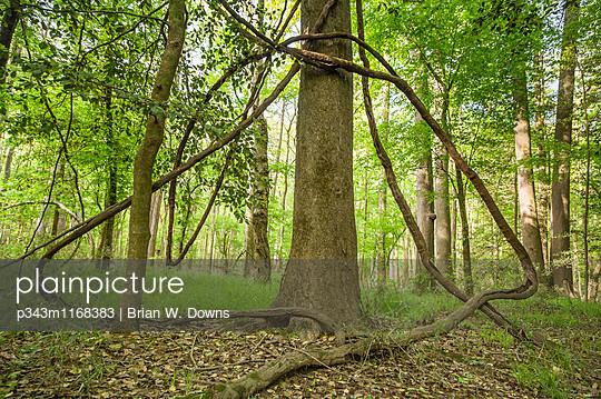 p343m1168383 von Brian W. Downs