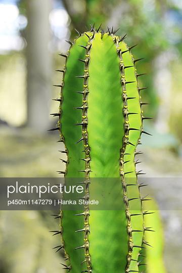 Stacheliger Kaktus    - p450m1147279 von Hanka Steidle