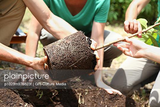 People planting tree in garden