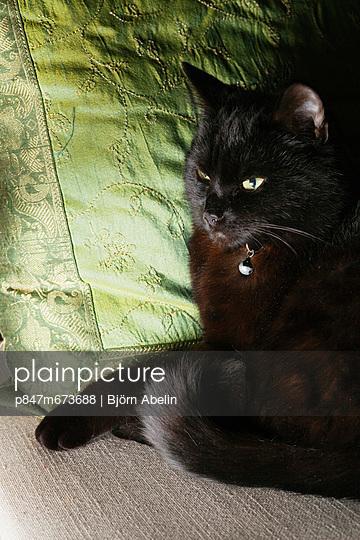 Black catresting on thegreenpillow (Svart katt vilar på grön kudde)