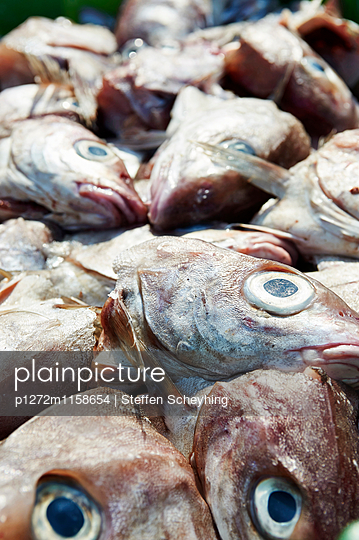 Fischköpfe - p1272m1158654 von Steffen Scheyhing