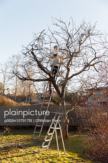Sweden, Sodermanland, Jarna, Woman pruning apple tree (malus domestica)