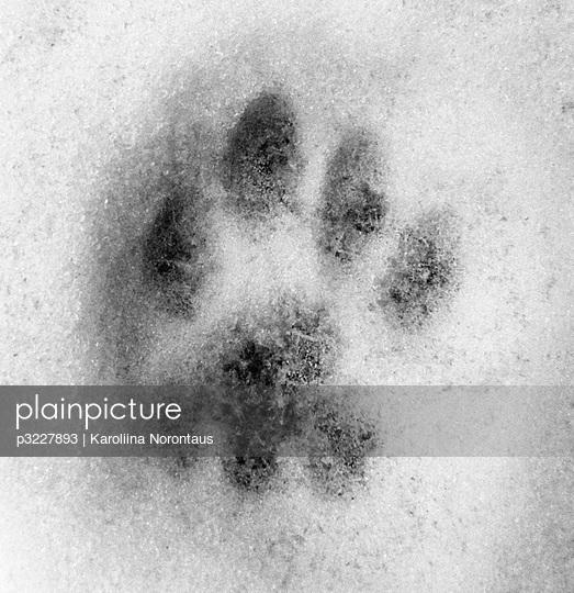 Cat paw mark in snow