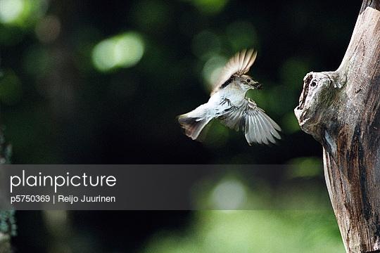 A flying bird.